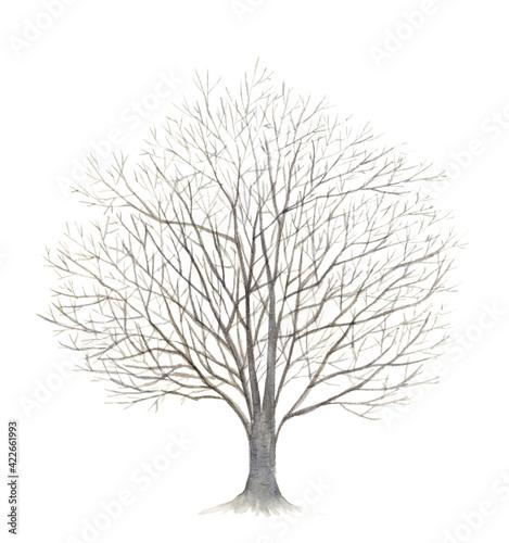 冬の桜の木 水彩イラスト Fototapeta