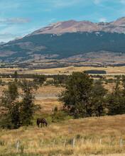 Día Soleado En El Campo Con Montes De Fondo Y Caballo En El Frente.