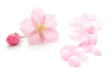 桜 花びら 春 白 背景