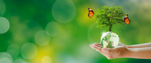 Growing Tree On Globe Crystal Glass Ball In Hand With Butterfly. Green Background With Bokeh. World Mental Health And World Earth Day. Saving Environment And World Ecology Concept.