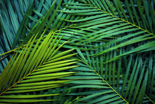 Closeup Nature View Of Palm Leaves Background Textures