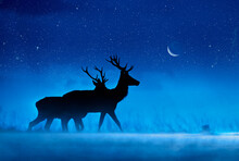 Two Stags Silhouetted On A Moonlit Starry Misty Night Richmond Park London UK Europe