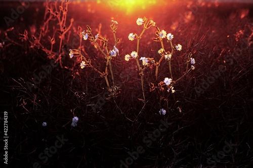 Fototapeta Letnie kwiaty w słońcu obraz