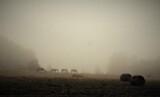 Fototapeta Tęcza - Konie we mgle