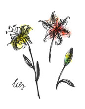Set Of Vector Hand Drawn Ink Line Art And Watercolor Stain Flowers