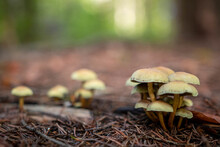 Closeup Shot Of Small Wild Mushrooms Growing In A Forest
