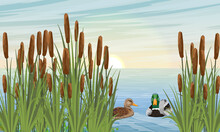A Pair Of Mallard Ducks Swim In The River In The Reeds. Wild Waterfowl Anas Platyrhynchos. Realistic Vector Landscape