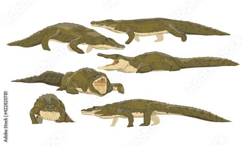 Nile crocodile Crocodylus niloticus set Fototapet