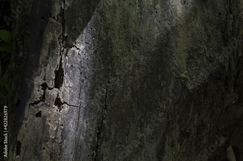 Fotografie, Obraz Old tree trunk with bark beetle holes in shadow
