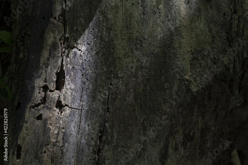 Billede på lærred Old tree trunk with bark beetle holes in shadow