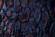 Natural Background. Intricate Pattern Of Tree Bark.