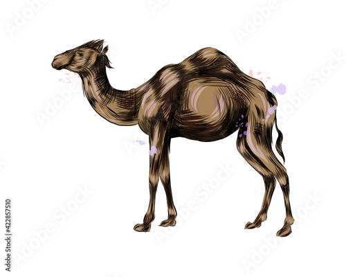 Papel de parede Arabian camel from a splash of watercolor, colored drawing, realistic