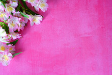 A Bunch Of White And Pink Alstroemeria Lily Of The Incas Flowers On A Pink Background