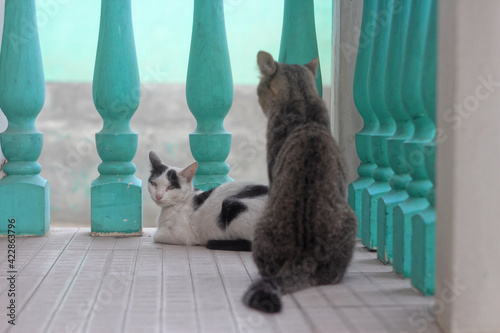 Fotografia Two cats on a wooden veranda with turquoise balusters