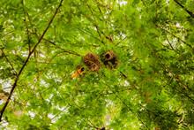 .little African Bird Yellow Black-headed Weaver On A Tree Near Its Nest