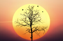 Silhouette Of Nature Landscape. Consist Of Bird Animal On Wood Dead Dry Tree Against Big Yellow Sunset Or Sunrise And Evening Sky Background. Scenery Of Horizon Scenic Sunny Summer At Outdoor.
