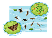 Top View Of Aquatic Insects In The Pond