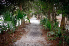 Hiking Path Through A Low Country Coastal Forest With Saw Palmettos And Pine Trees In Charleston, South Carolina.