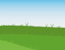Green Grass Under A Clear Sky