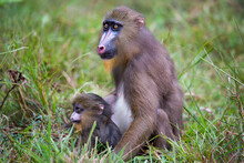 Gabon Wildlife