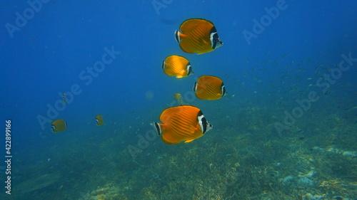 Fototapety, obrazy: school of fish