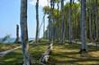 canvas print picture - Gespensterwald Nienhagen Ostsee
