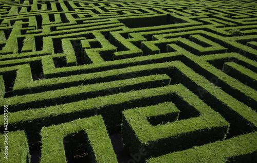 Green bushes maze Fototapet