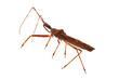 canvas print picture - Insekt Nahaufnahme