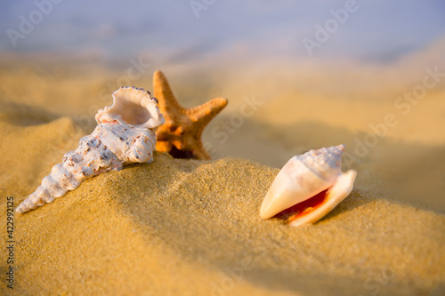Fotografiet Sea shells and starfish lie on the golden beach sand.