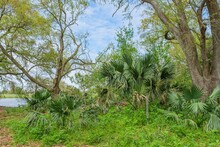 """Palmetto Stand In Couturie Forest With """"May Peace Prevail On Earth"""" Sign"""