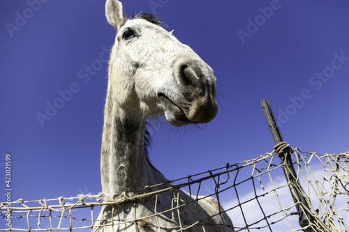 Fotografie, Tablou Horse in stable