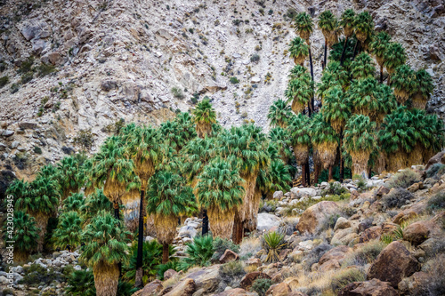 Joshua Trees in Joshua Tree National Park