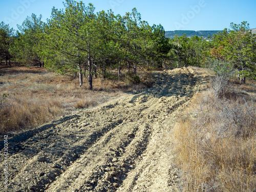 Protective fire strip in the forest, Crimean landscape Fototapeta