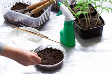 A Girl Planting Seeds In Wet Soil, Trays With Seedlings On A Light Background.