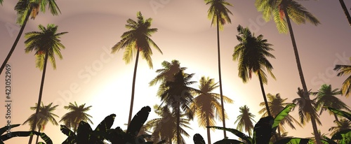 Morning palms against the backdrop of the setting sun,, 3D rendering