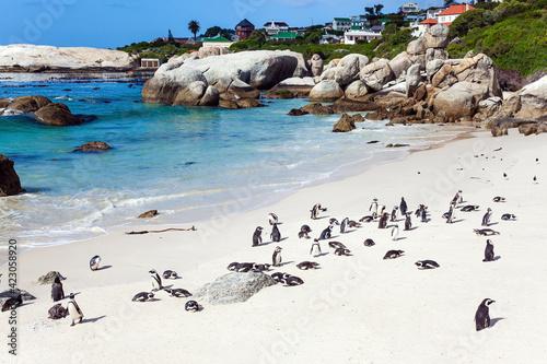 The flightless bird is penguin Fototapeta