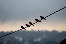 Aves Sobre Cableado En El Atardecer.