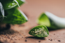 Closeup Pieces Of Green Succulent Plant With Dirt Placed On Wooden Surface In Light Place