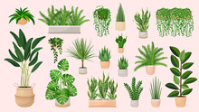 Set Of Houseplants In A Pots For Home, Office, Premises Decor. Colorful Vector Collection Of Illustrations Isolated On Pink Background. Trendy Home Decor With Plants, Urban Jungle.