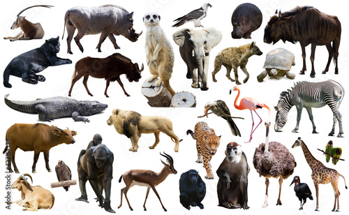 Fényképezés Set of different African animals isolated over white