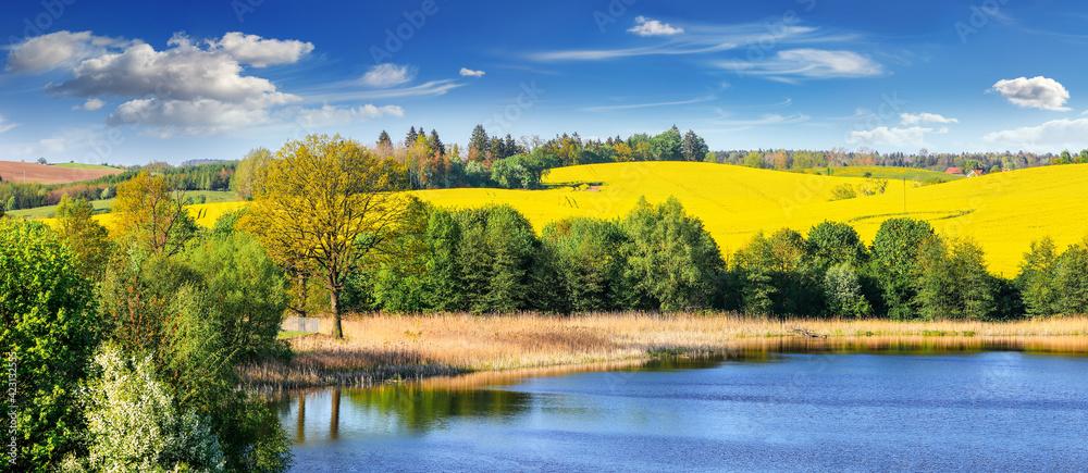 kwitnienie rzepaku na Mazurach w północno-wschodniej Polsce