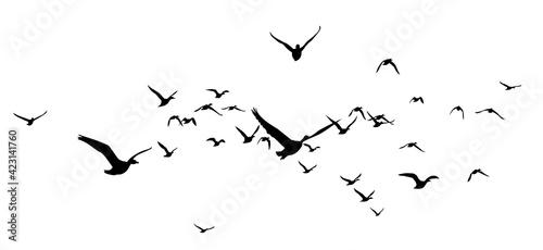 The Siluettes of flight ducks in the sky. - fototapety na wymiar