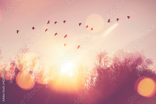Fotografija Birds flying and grass flower on sunset sky and cloud abstract background