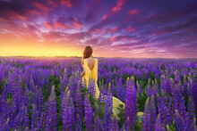 A Girl In A Long Yellow Dress Against The Background Of A Blooming Purple Lupine Field And A Bright Sunset Sky.