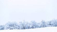 Winter Panoramic. Frost Forest Nature Scene With Beautiful Snow, Morning Sun, Blue Sky. Snowy White Christmas Tree In Sunshine. Beauty Nature Concept Background.