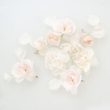 Close Up Of Group Of White Roses Floating In Water And Milk In Romantic Conceptual Fine Art Photo