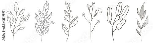 Fototapeta Graphic trendy set with elegant contemporary group of minimal floral line art. obraz