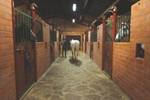 Horse In A Equestrian Centre