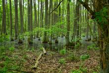 Moor Sumpf Im Wald