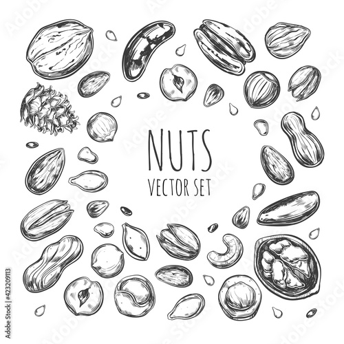 Fototapeta Nuts and seeds collection. Vector Hand drawn objects . Isolated obraz